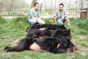 Begravning av tre f.d. gallbjörnar