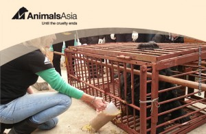 Animals Asia - Until the Cruelty Ends