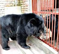 De räddade gallbjörnarna George och Laetizia samtalar