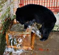 Den f.d. gallbjörnen Gypsy upptäcker vatten i sin nya lya