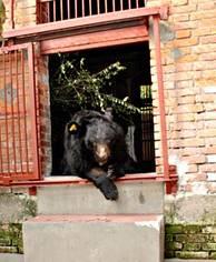 F.d. gallbjörnen Tanya på trappan i sitt nya hem