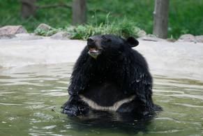 APN:s sponsrade björn SomSi i Thailand