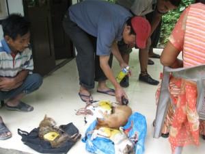 Kattägare väntar på sina katter efter sterilisering på Kalimpongs djurcenter i Indien