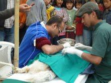 Operation av hund på mobil vårdcentral