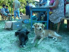 Hundar på öppen djurmottagning i Kalimpong, Indien