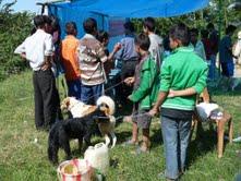 Väntande människor och djur på öppen djurmottagning i Kalimpong, Indien