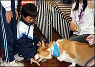 Kinesisk skolpojke ger en hund godis på Professor Paws skolutbildningsprogram