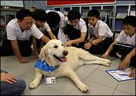 Kinesiska skolbarn klappar en lärarhund i Professor Paws utbildningsprogram