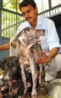 Man arbetar med hund i Indien