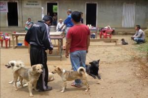 Hundar på Kalimpong Animal Shelters mobila veterinärklinik i Dalapchand Busty, Indien