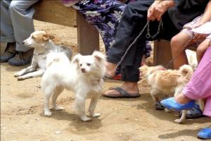 Liten hund på Kalimpong Animal Shelters mobila veterinärklinik