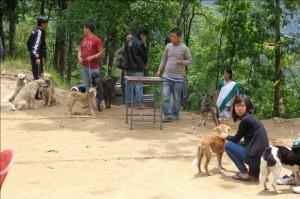 Kalimpong Animal Shelters mobila veterinärklinik i Dalapchand Busty, Indien