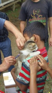 Kattunge får vaccination